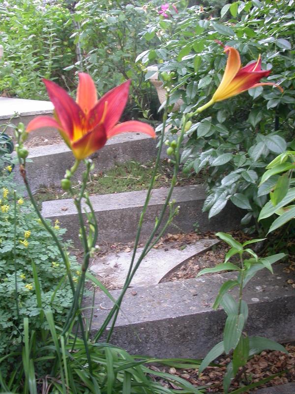 jardin des `MAL`AKHIM  Lysiane:historique_jardin:dscn2949