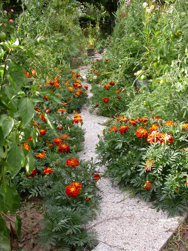 jardin des `MAL`AKHIM  Lysiane:historique_jardin:dscn3544