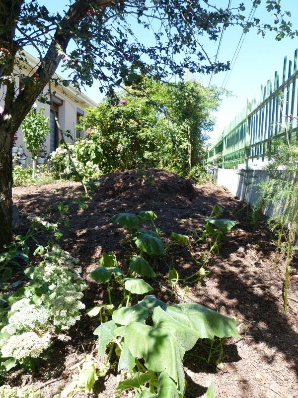 jardin des `MAL`AKHIM  - Page 3 Lysiane:historique_jardin:p1030279r