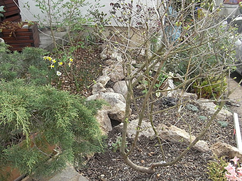 jardin des `MAL`AKHIM  Lysiane:historique_jardin:r0023658r