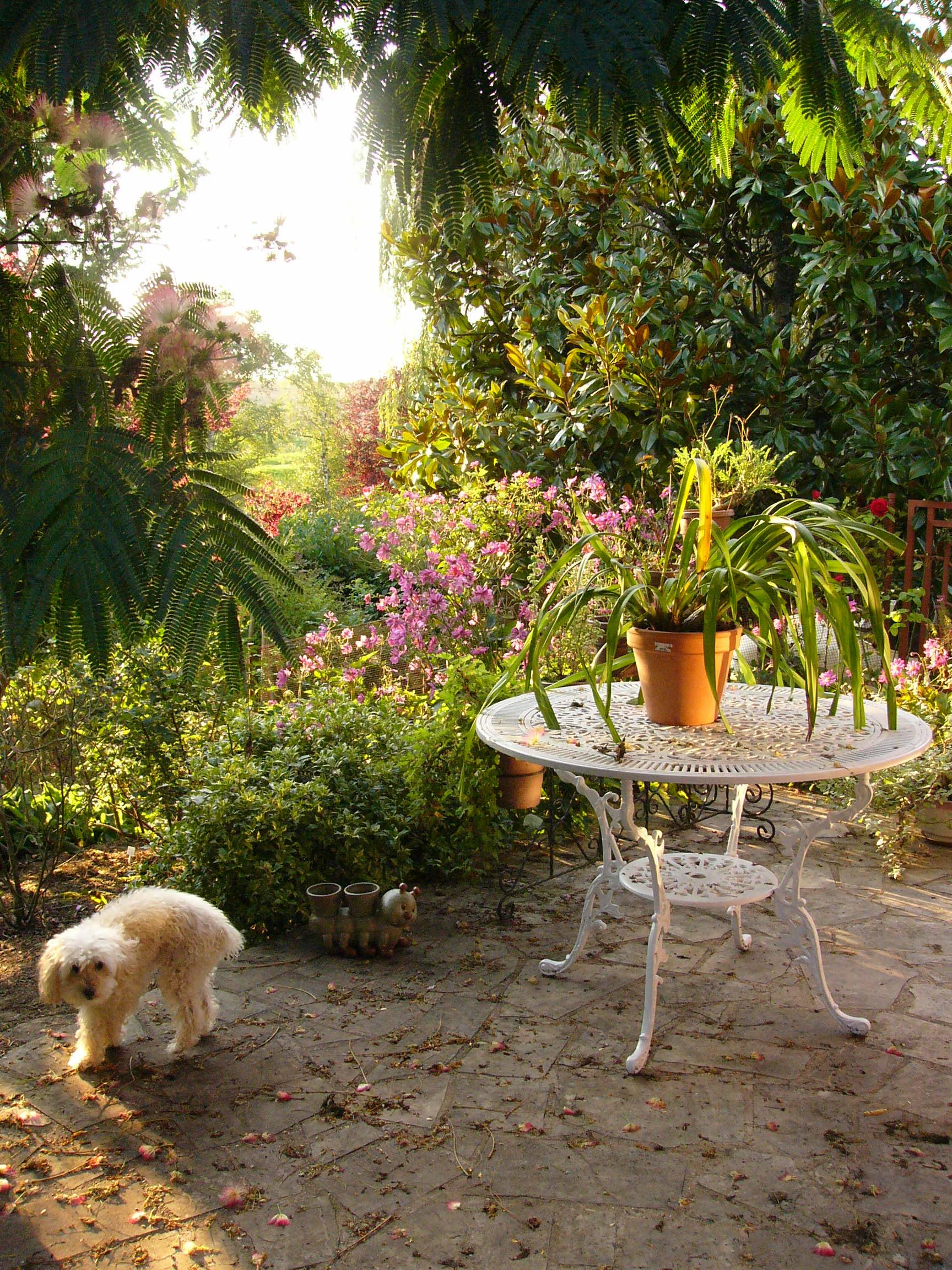 jardin des `MAL`AKHIM  Lysiane:p1250897