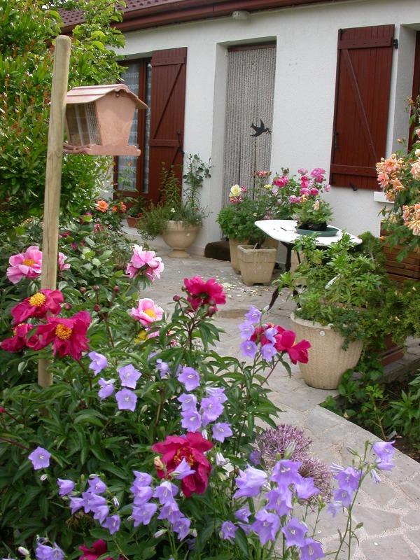 jardin des `MAL`AKHIM  Lysiane:plantes_du_jardin:00000161r