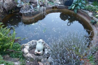 pomper recherche idée Lysiane:plantes_du_jardin:aquatique:p1210179