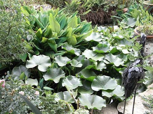 pomper recherche idée Lysiane:plantes_du_jardin:aquatique:r0019662
