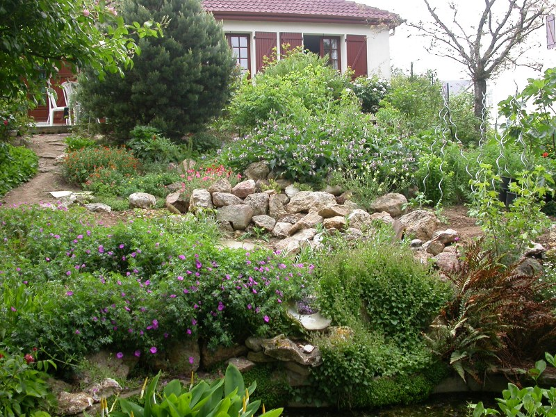 jardin des `MAL`AKHIM  Lysiane:plantes_du_jardin:dscn5527r