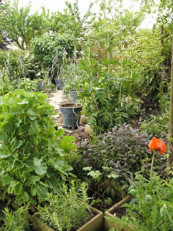 jardin des `MAL`AKHIM  Lysiane:potager:legumes:p1320500r