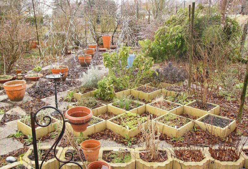 jardin des `MAL`AKHIM  Lysiane:potager:plantes_aromatiques:p1280982
