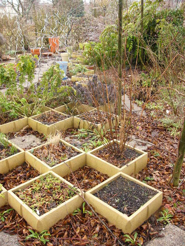 jardin des `MAL`AKHIM  Lysiane:potager:plantes_aromatiques:p1280984