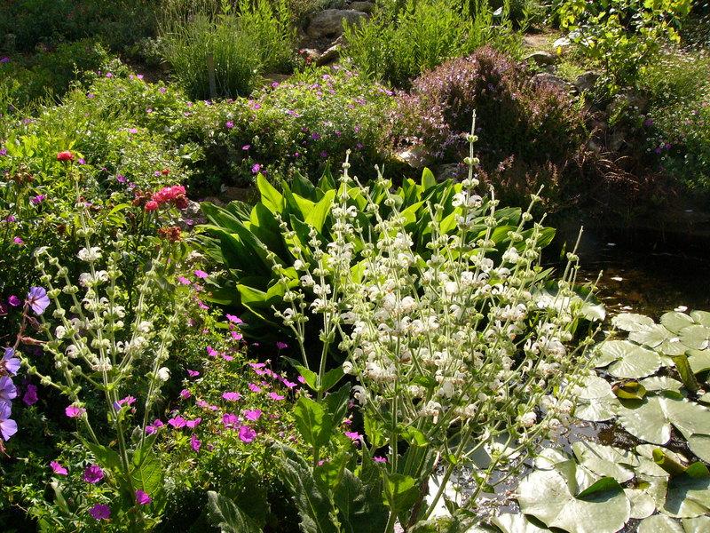 jardin des `MAL`AKHIM  Lysiane:visite_du_jardin:2008:p1190653