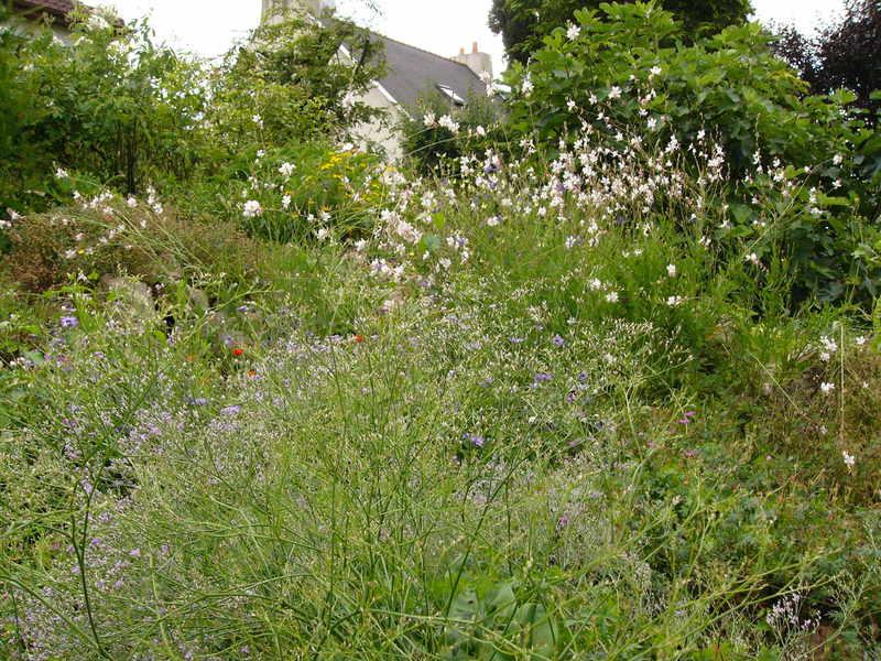 jardin des `MAL`AKHIM  Lysiane:visite_du_jardin:2008:p1220115