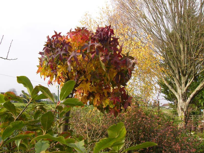 jardin des `MAL`AKHIM  Lysiane:visite_du_jardin:2008:p1280420