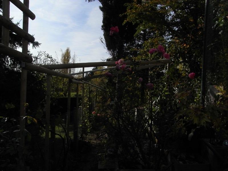 jardin des `MAL`AKHIM  Lysiane:visite_du_jardin:2009:r0013206_red