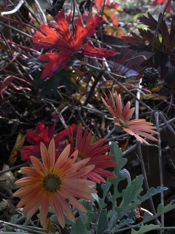 jardin des `MAL`AKHIM  Lysiane:visite_du_jardin:2009:r0013217_red