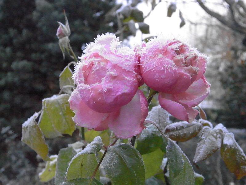 jardin des `MAL`AKHIM  Lysiane:visite_du_jardin:2010:r0022908red