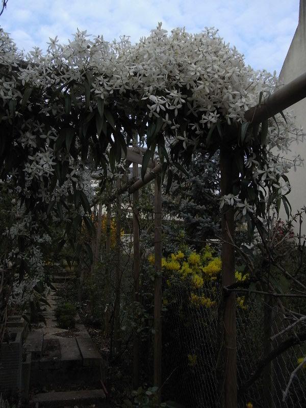 jardin des `MAL`AKHIM  Lysiane:visite_du_jardin:2011:r0023690r
