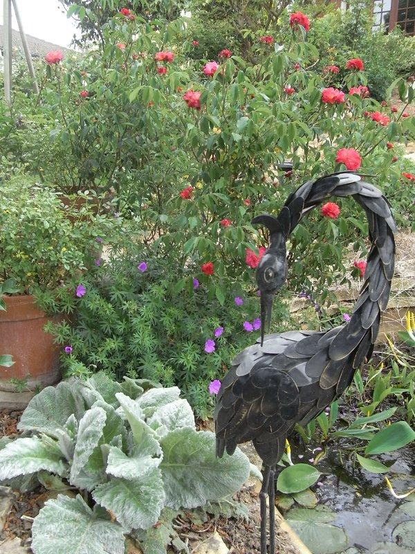 jardin des `MAL`AKHIM  Lysiane:visite_du_jardin:2011:r0025089r