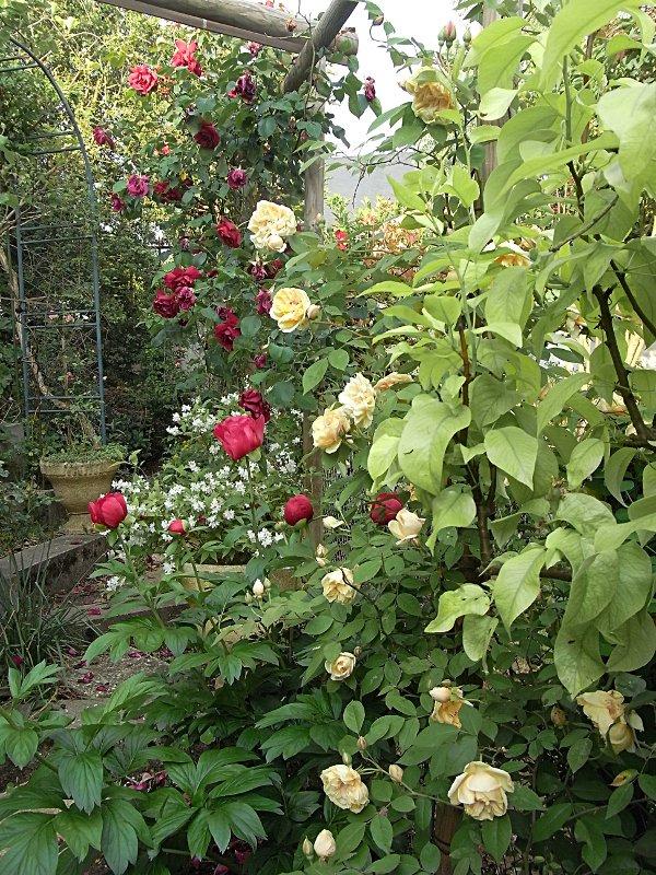 jardin des `MAL`AKHIM  Lysiane:visite_du_jardin:2011:r0025295r