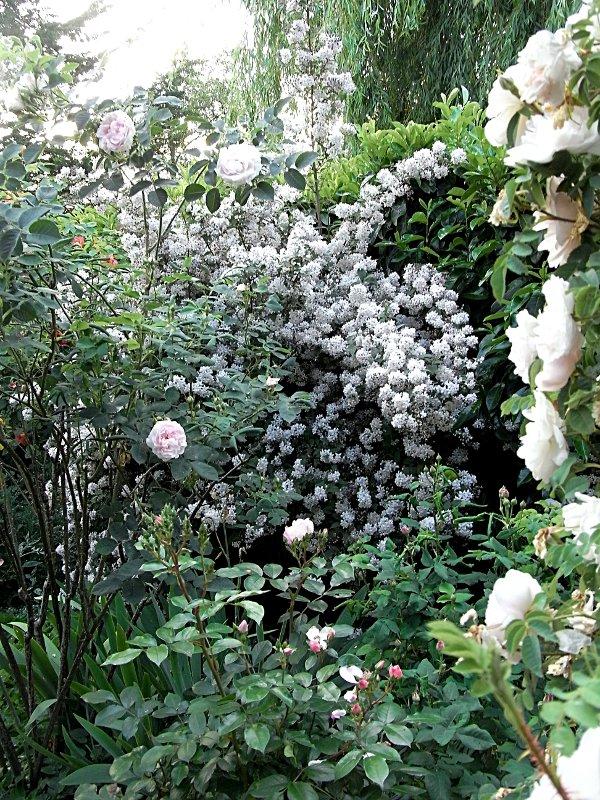 jardin des `MAL`AKHIM  Lysiane:visite_du_jardin:2011:r0025655r