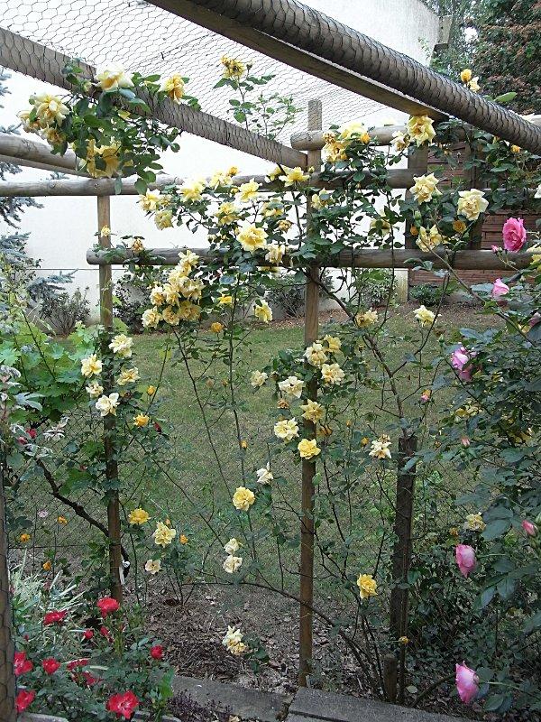 jardin des `MAL`AKHIM  Lysiane:visite_du_jardin:2011:r0025715r