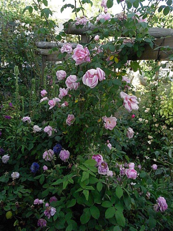 jardin des `MAL`AKHIM  Lysiane:visite_du_jardin:2011:r0025853r