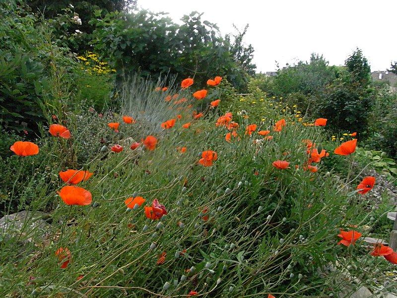 jardin des `MAL`AKHIM  Lysiane:visite_du_jardin:2011:r0026893r