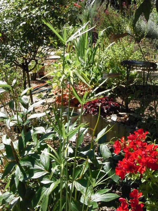 jardin des `MAL`AKHIM  Lysiane:visite_du_jardin:2011:r0027469r