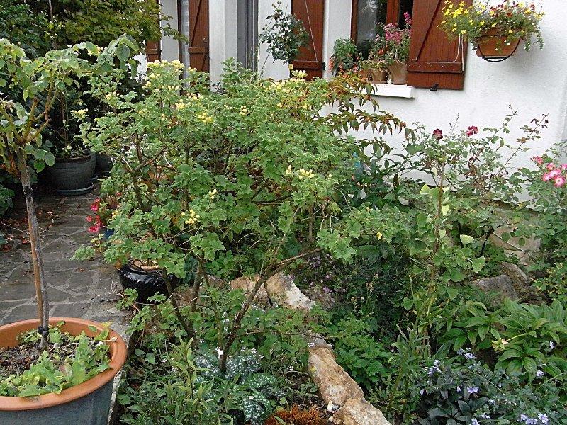 jardin des `MAL`AKHIM  Lysiane:visite_du_jardin:2011:r0027889r
