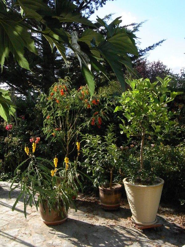 jardin des `MAL`AKHIM  Lysiane:visite_du_jardin:2011:r0028469r