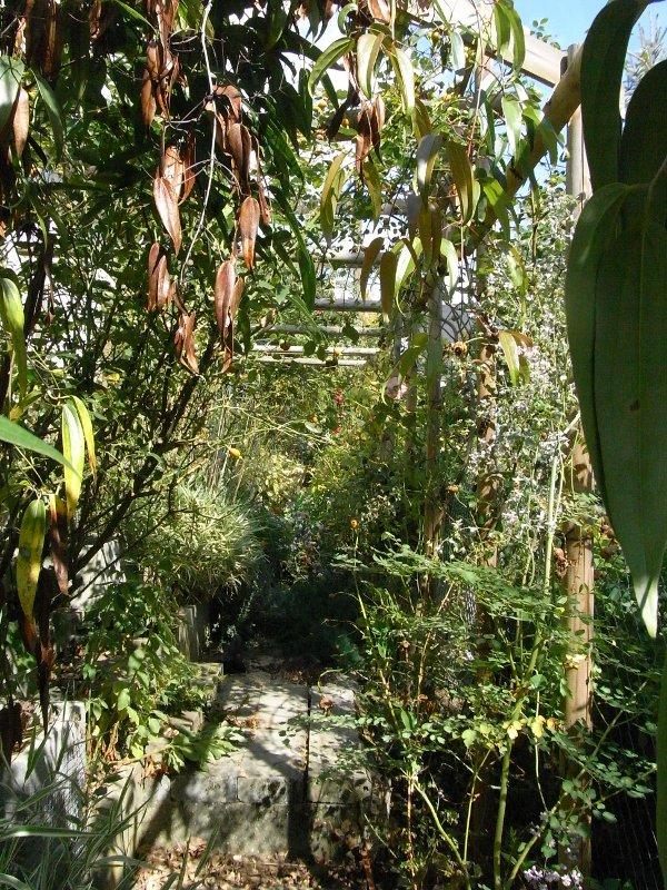 jardin des `MAL`AKHIM  Lysiane:visite_du_jardin:2011:r0029263r