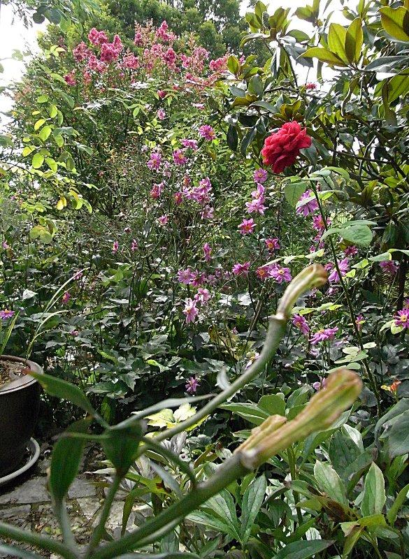 jardin des `MAL`AKHIM  Lysiane:visite_du_jardin:2011:r0029376r