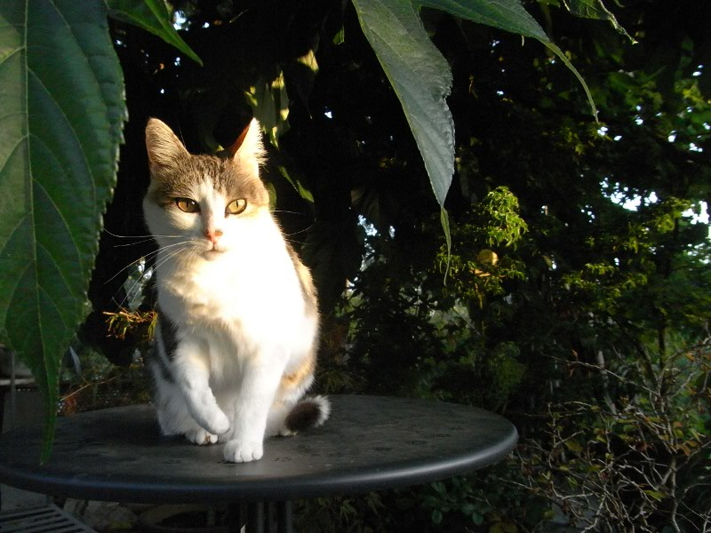 jardin des `MAL`AKHIM  Lysiane:visite_du_jardin:2011:r0029529r