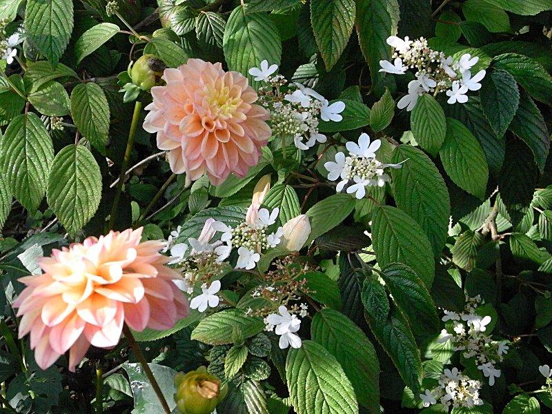 jardin des `MAL`AKHIM  Lysiane:visite_du_jardin:2011:r0029569r
