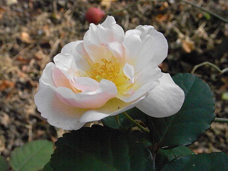 jardin des `MAL`AKHIM  Lysiane:visite_du_jardin:2011:r0030382r