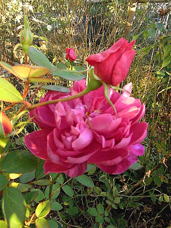 jardin des `MAL`AKHIM  Lysiane:visite_du_jardin:2011:r0030511r