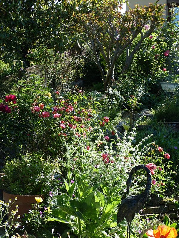 jardin des `MAL`AKHIM  Lysiane:visite_du_jardin:2012:p1000772r