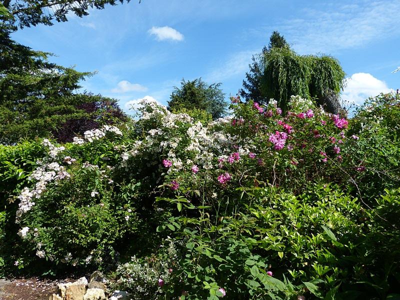 jardin des `MAL`AKHIM  Lysiane:visite_du_jardin:2012:p1010439r