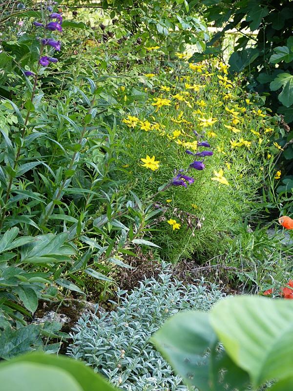 jardin des `MAL`AKHIM  Lysiane:visite_du_jardin:2012:p1020626r