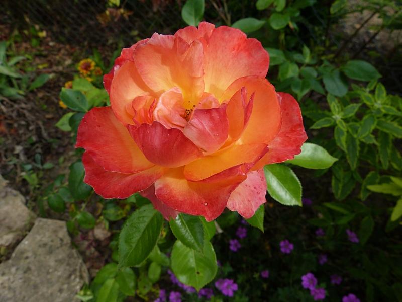 jardin des `MAL`AKHIM  Lysiane:visite_du_jardin:2012:p1020815r