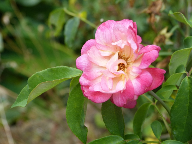 jardin des `MAL`AKHIM  Lysiane:visite_du_jardin:2012:p1030578r
