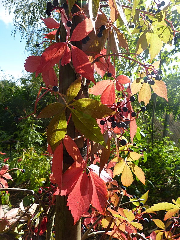 jardin des `MAL`AKHIM  Lysiane:visite_du_jardin:2012:p1030779r