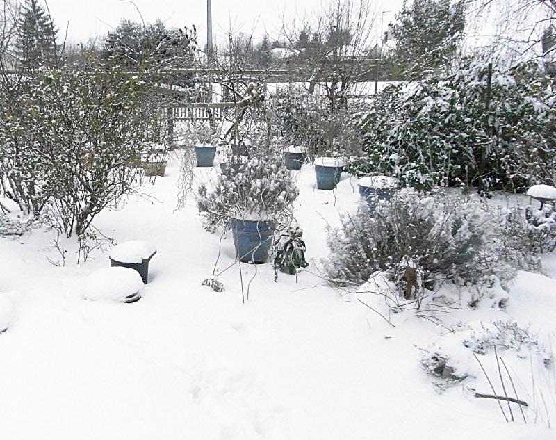 jardin des `MAL`AKHIM  Lysiane:visite_du_jardin:2012:r0030942r