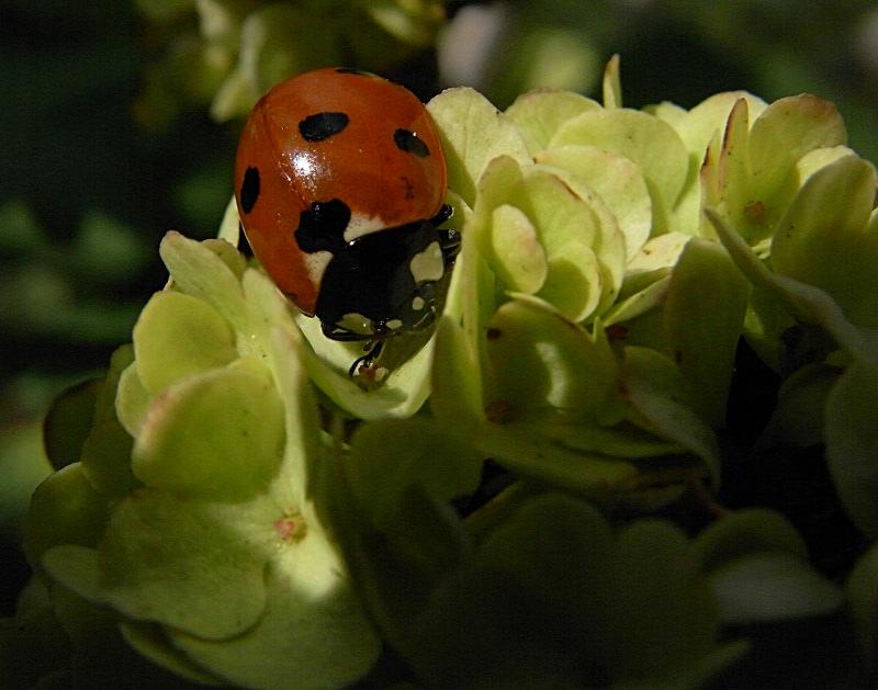 jardin des `MAL`AKHIM  Lysiane:visite_du_jardin:2012:r0031945r