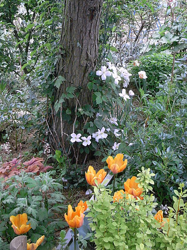 jardin des `MAL`AKHIM  Lysiane:visite_du_jardin:2012:r0032089r