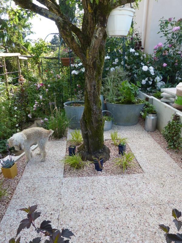 jardin des `MAL`AKHIM  - Page 3 Lysiane:visite_du_jardin:2013:p1060456