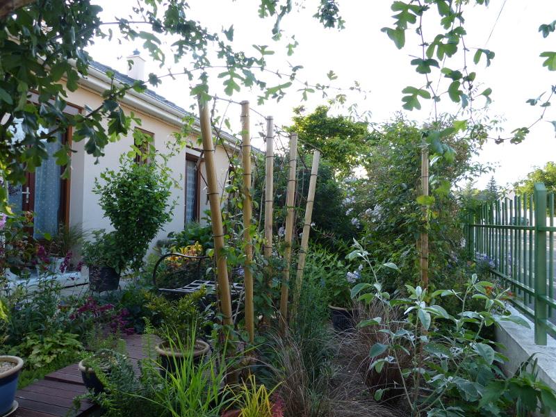 jardin des `MAL`AKHIM  - Page 3 Lysiane:visite_du_jardin:2013:p1070628