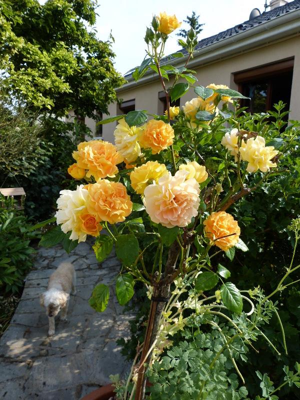 jardin des `MAL`AKHIM  - Page 4 Lysiane:visite_du_jardin:2013:p1080027