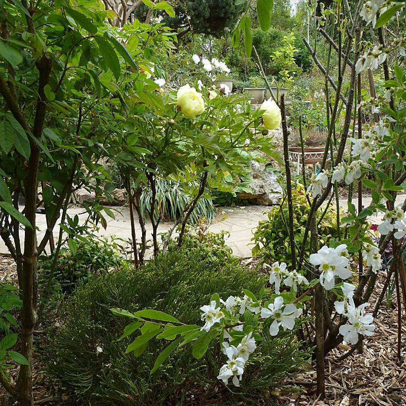 jardin des `MAL`AKHIM  - Page 4 Lysiane:visite_du_jardin:2014:p1110372