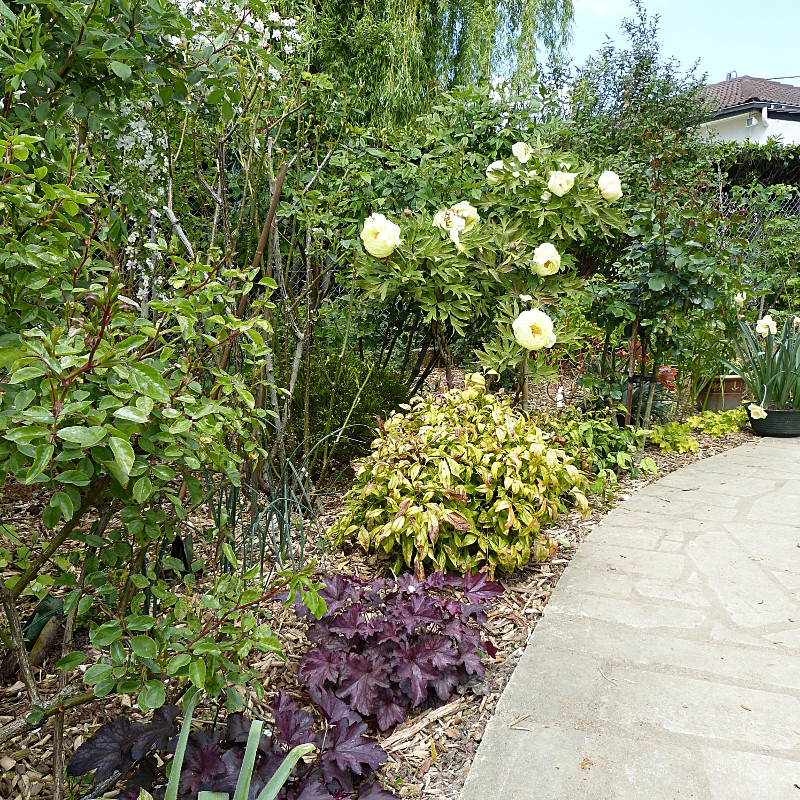 jardin des `MAL`AKHIM  - Page 4 Lysiane:visite_du_jardin:2014:p1110381