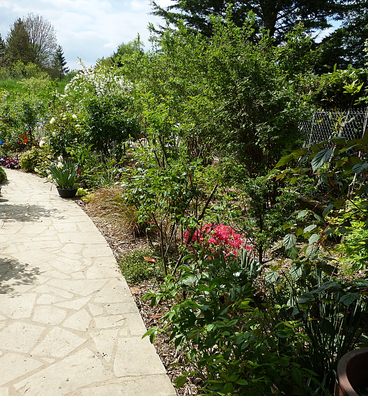 jardin des `MAL`AKHIM  - Page 4 Lysiane:visite_du_jardin:2014:p1110382