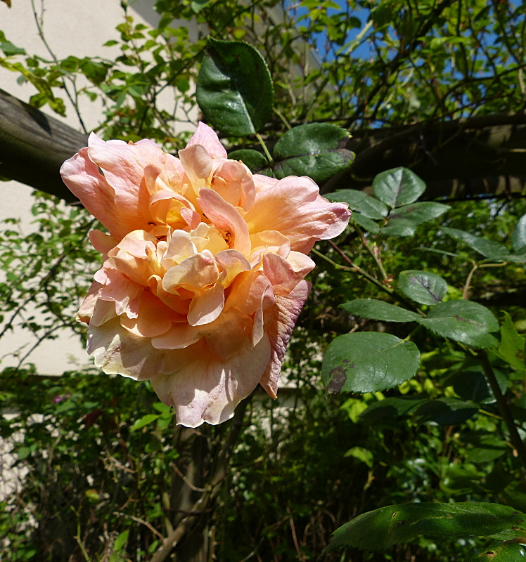 jardin des `MAL`AKHIM  - Page 4 Lysiane:visite_du_jardin:2014:p1110409